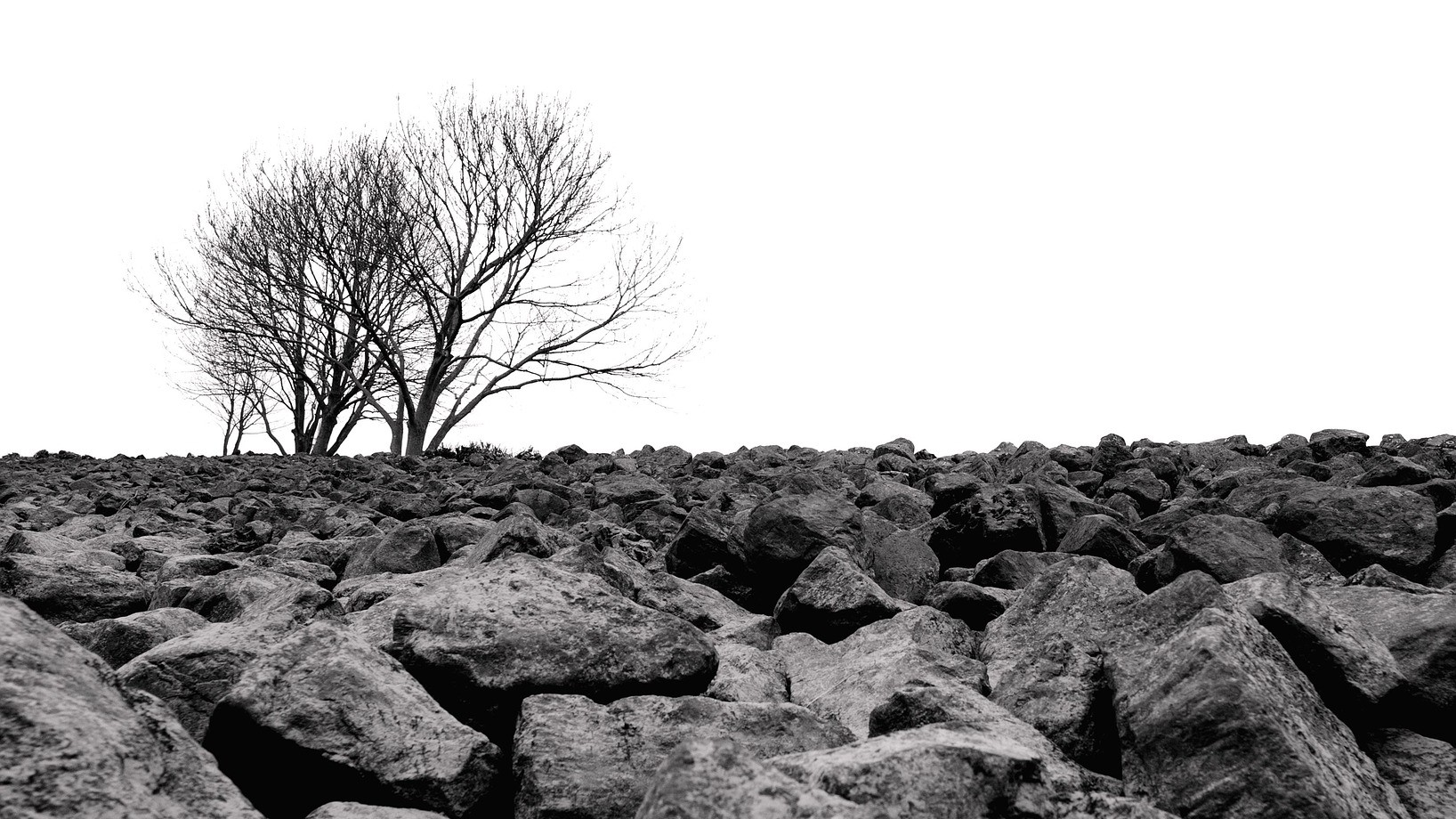 Black and white photo of stark trees on a rocky plain.